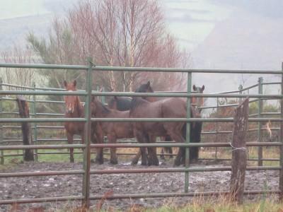 Los caballos en dependencias municipales