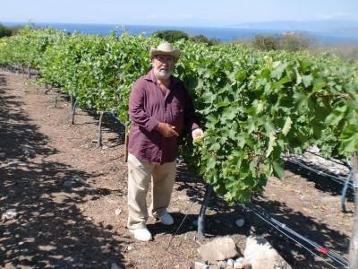 Antonio en sus viñas dominicanas