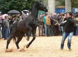 caballos jpg