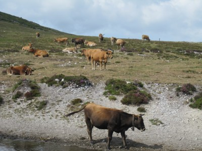 Sierra del Palo