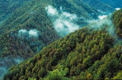 Bosque de Muniellos en Cangas del Narcea