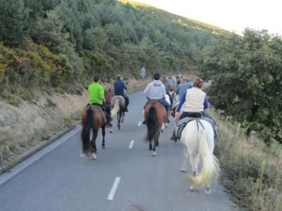 concurso morfologico caballos