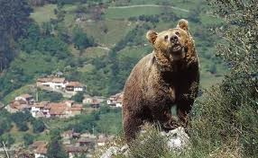 osos jpg