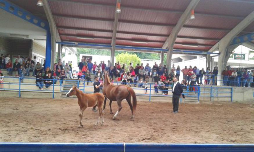 CANGAS DEL NARCEA.- Caballos de raza en La Himera