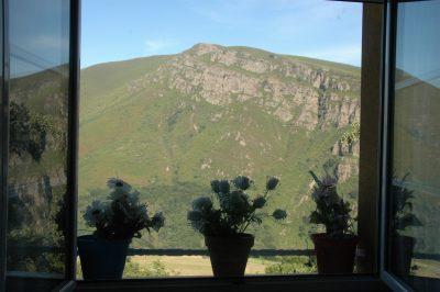 osos-desde-mi-ventana
