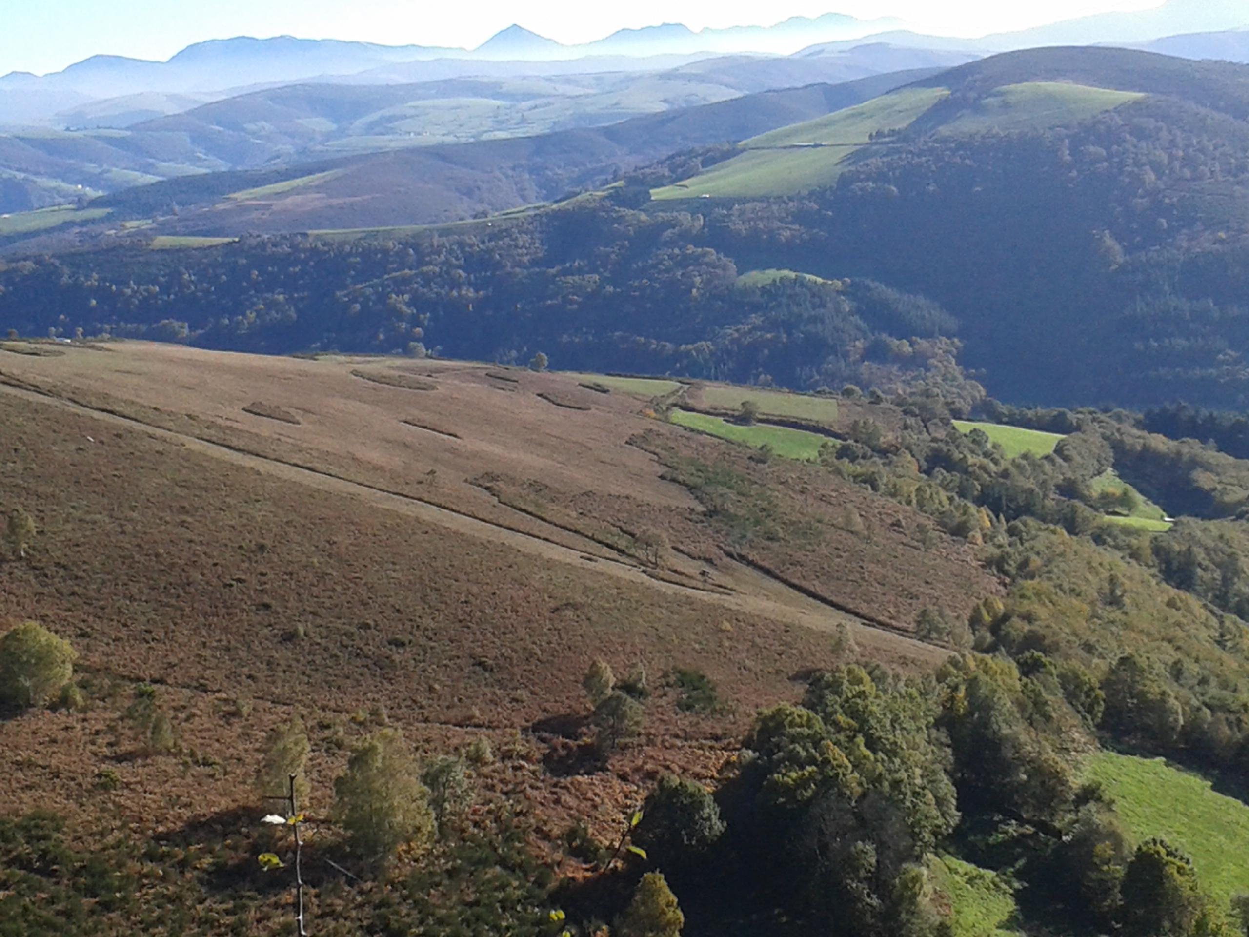 ALLANDE- Mejoras forestales en  Santullano