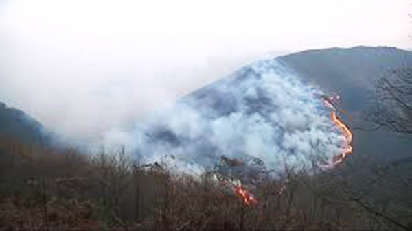 SUROCCIDENTE.- Reclaman la participación de los ganaderos en la gestión de los montes como prevención de incendios