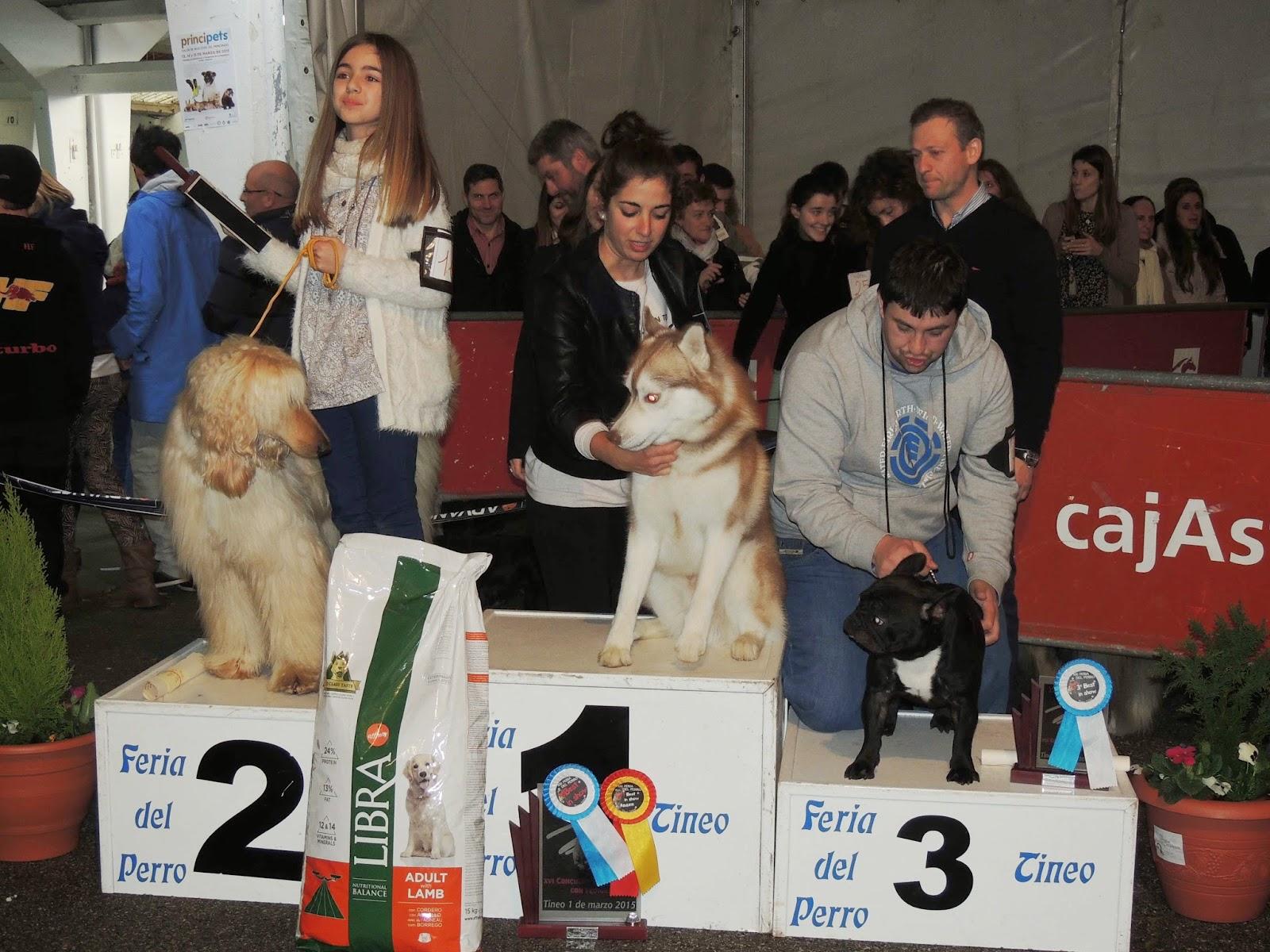 TINEO.- Feria del Perro y concursos caninos este fin de semana. Hoy, cros solidario