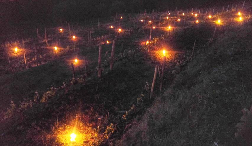 La foto y su pie: Fuego en las viñas