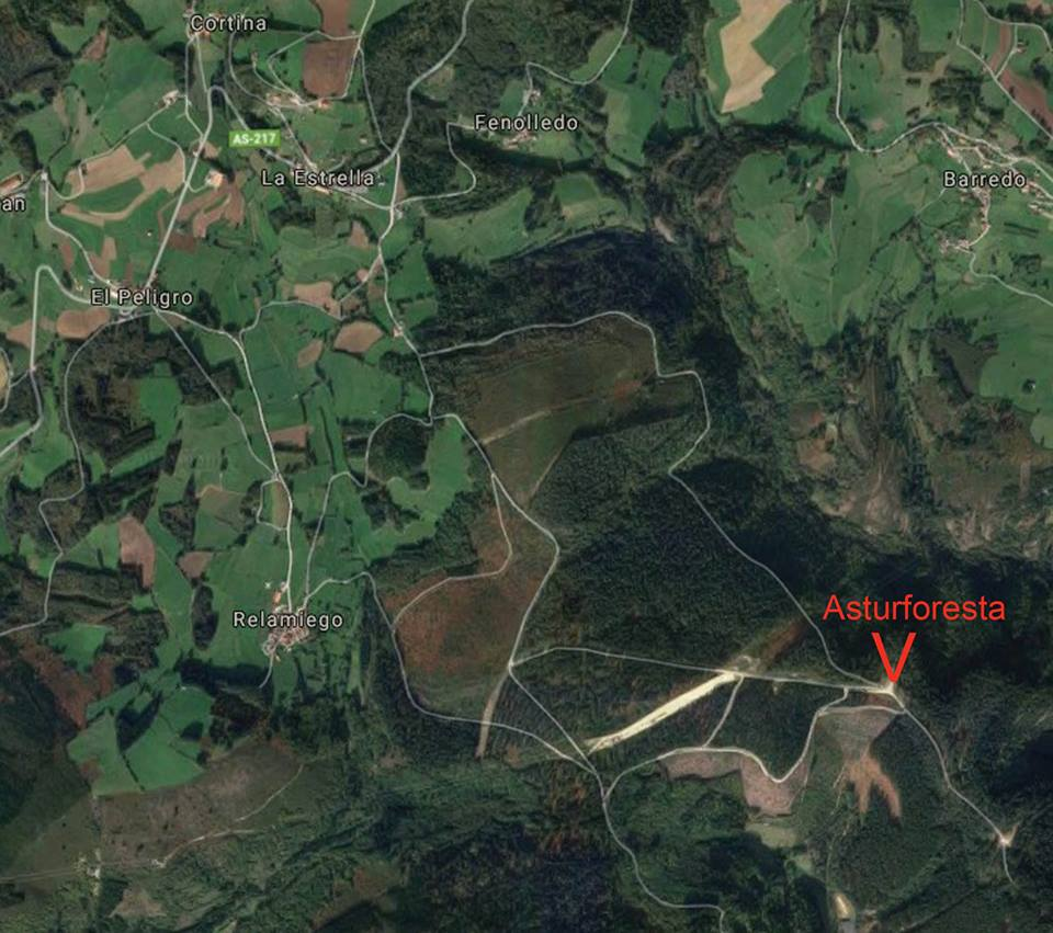 TINEO- Hoy se presenta Asturforesta en el monte Armayán