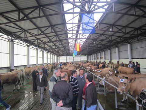 POLA DE ALLANDE.- Mejoran las reses pero la carne no se paga, afirman los ganaderos