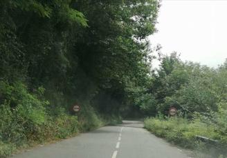CANGAS DEL NARCEA.- Comienza el desbroce de carreteras en el occidente