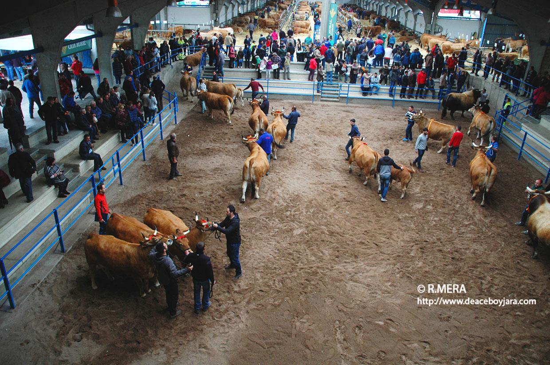 CANGAS DEL NARCEA.- Subvenciones a certámenes ganaderos