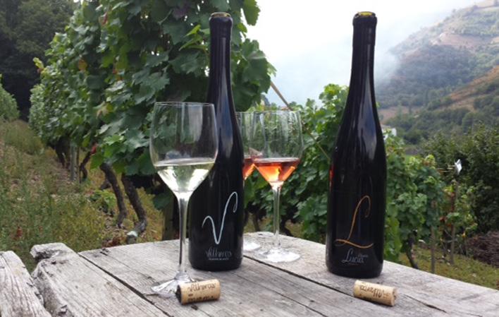CANGAS DEL NARCEA.- Más premios para los vinos cangueses. Ahora Vitheras