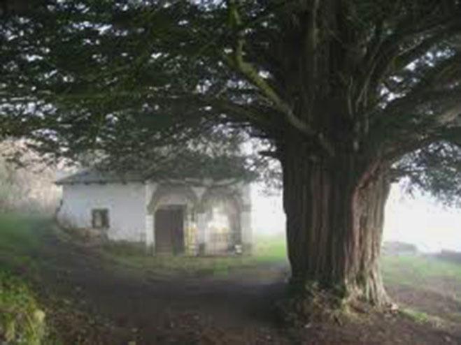 ALLANDE.-Iglesia y tejo de Santa Coloma, históricos