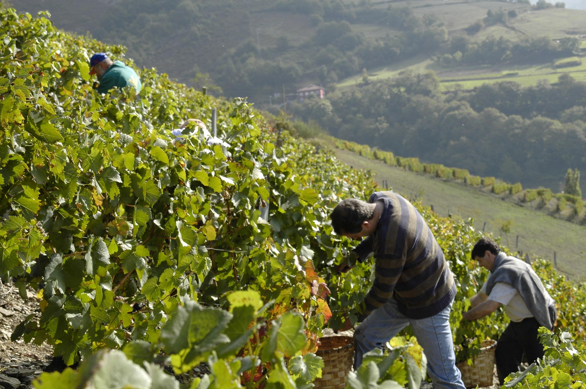 """CANGAS DEL NARCEA.- """"El gobierno debe apoyar firmemente el vino de Cangas"""""""