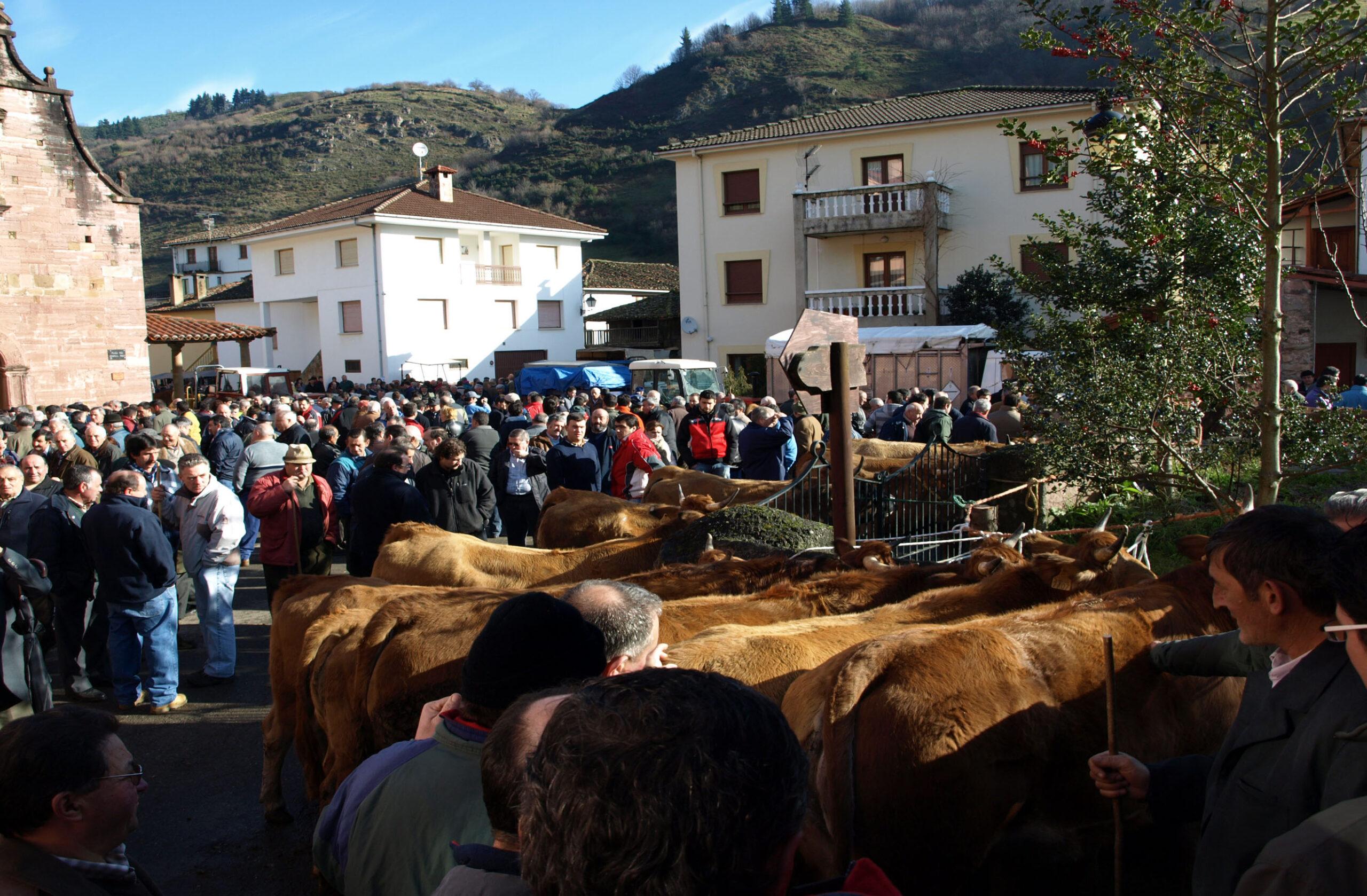 No habrá feria de San Blas ni festival del perro