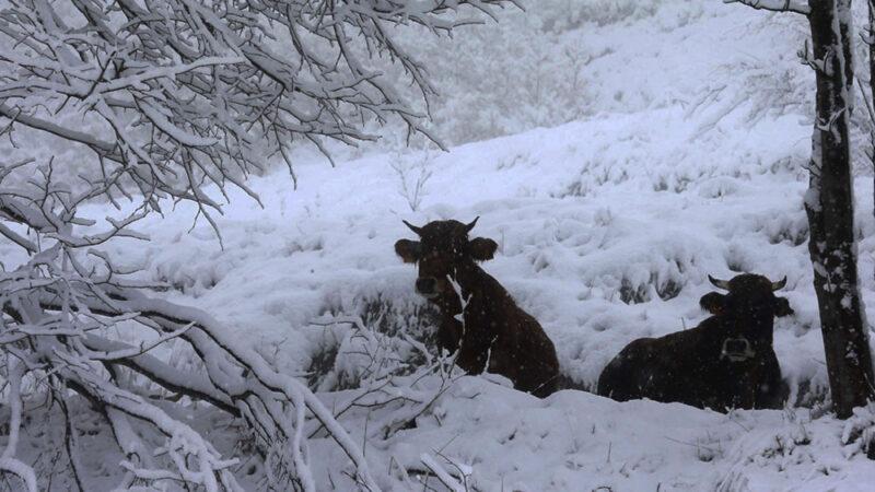 Las nevadas técnicas… y las de Gerardo