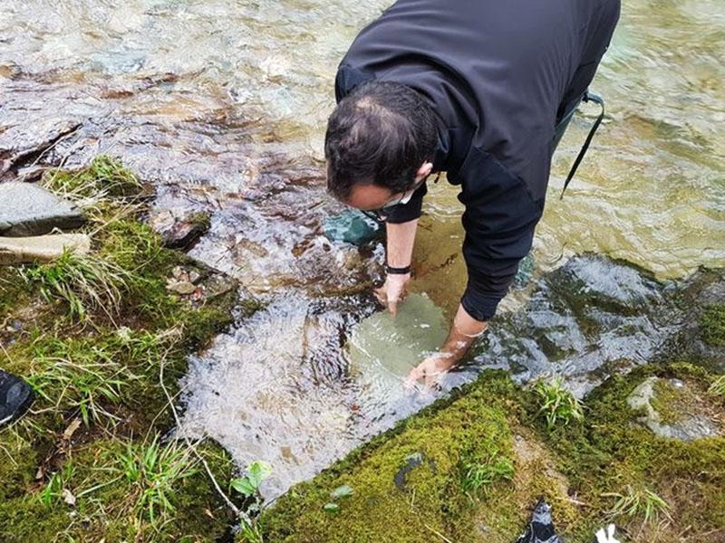 Novedosa repoblación fluvial
