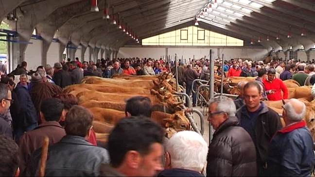 CANGAS.- Suspendida la Feria de Ramos