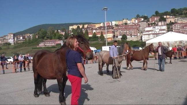Aves, feria, bobino y caballos de pasto en Tineo