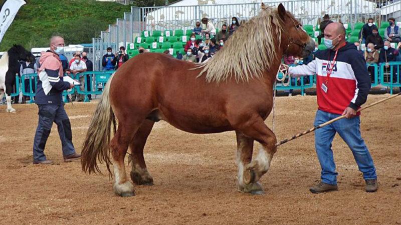 La carne de caballo de Asturias tendrá IGP a finales de año