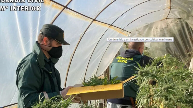 Detenido un cangués por cultivo de marihuana